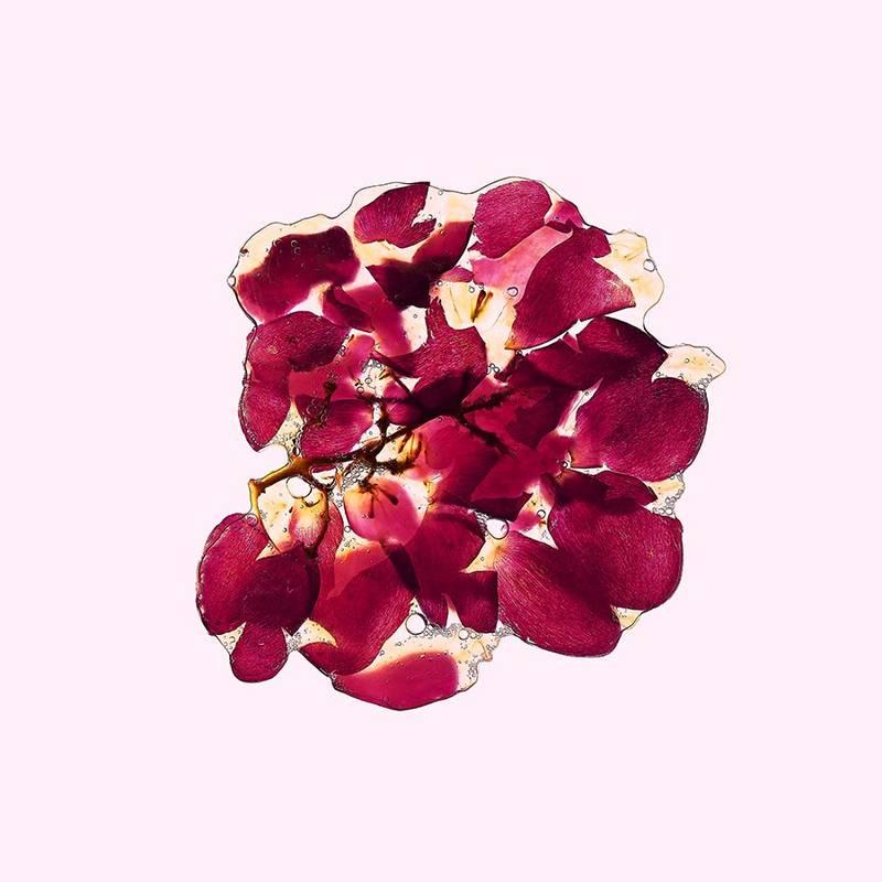 46_Trauben_Flatfruit